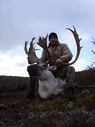 My second Caribou